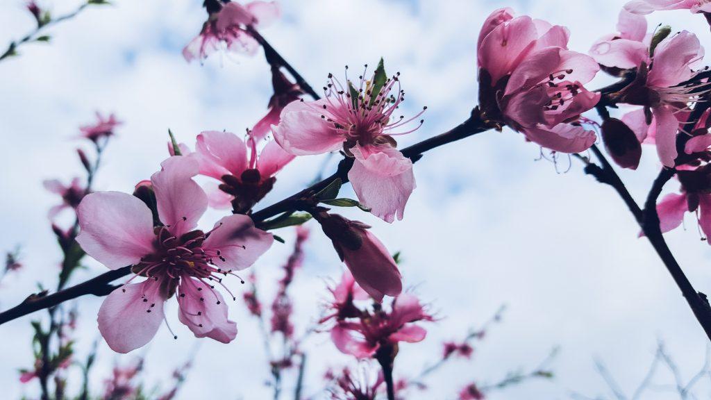 aroma-aromatic-bloom-62277